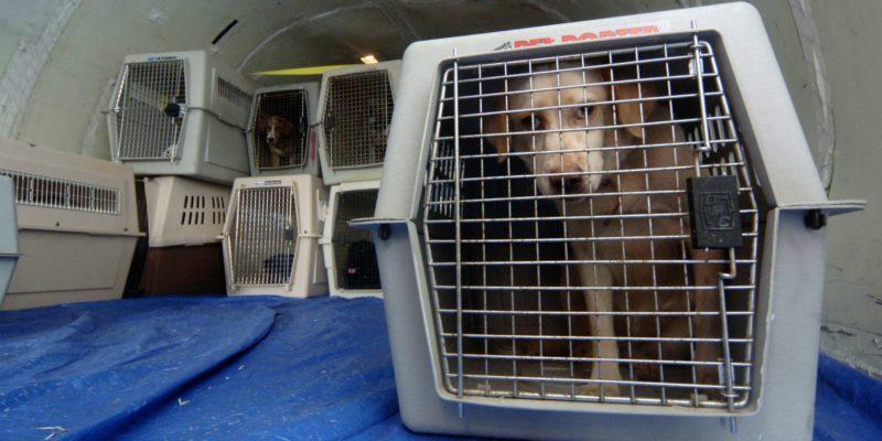 Клетка как средство изоляции больной собаки
